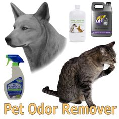 Have pets and problems with bad odor? How to remove cat urine smell?