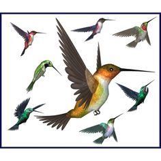 Hummingbird art - Google Search