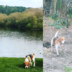 #SPEAKMYBEAGLE | Repoest from IG @beth_betty_ford