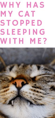 Cute Cats And Kittens, Cool Cats, Cat Behavior Problems, First Time Cat Owner, Pet Stairs, Cat Sleeping, Love Pet, Animal Memes, Pet Care
