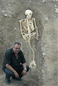 Is it a real mermaid skeleton in the photo? But it sure does look like a real mermaid skeleton. But to me it really does look like a real mermaid. Real Mermaids, Mermaids Exist, Are Mermaids Real Proof, Fantasy Mermaids, Mermaids The Body Found, Real Life Mermaid Found, Mermaid Skeleton, Mythical Creatures, Weird Creatures