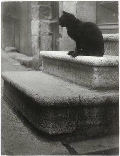 Black Cat on Steps cat photography by Brassai - aka Gyula Halasz