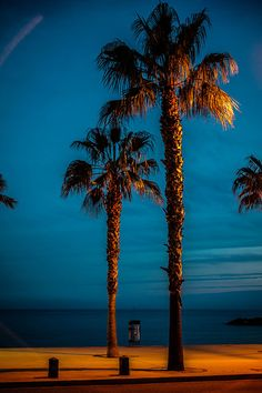 Palm trees at night. La Ciotat © Jean-Christophe Clamagirand http://www.loeildelaphotographie.com/en/2017/07/26/article/159960808/your-holidays-pictures-jean-christophe-clamagirand-3/