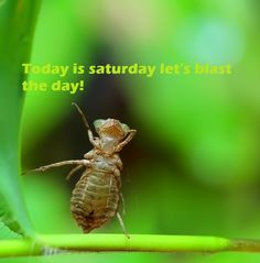Today is #Saturday Let's Blast the day!
