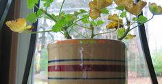 Cum se păstrează muşcatele peste iarnă | Paradis Verde Planter Pots, Home And Garden, Rustic, Gardening, Green, Interiors, Rustic Feel, Garten, Retro