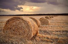 straw in the field