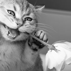 Naughty cat by David Smulders on 500px