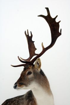 Winter Stag: Red Bubble.