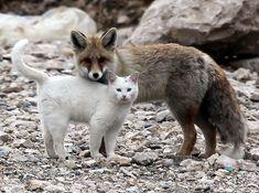 Gato y Zorro