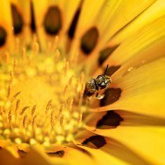AMARILLO #flower #flor #bee #abeja