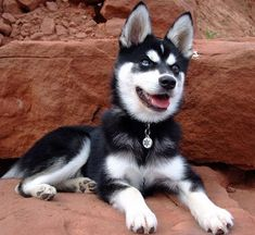 Talking the hubby into getting one in a year or so!! ~Klee Kai~