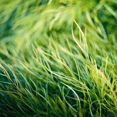 Nature / grass / green / bokeh by ►CubaGallery, via Flickr
