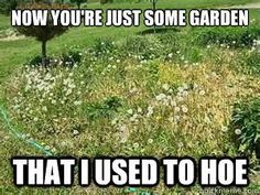 I'm a huge gardening fanatic and I can relate to these memes so much! Here are 30 Gardening Memes that will make you want to garden right now Gardening Memes, Gardening For Dummies, Organic Gardening Tips, Organic Farming, Gardening Services, Gardening Supplies, Garden Hoe, Lawn And Garden, Garden Fences