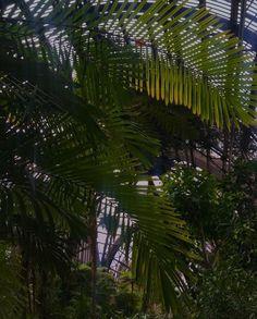 Vacation Trips, Plant Leaves, Plants, Travel, Viajes, Destinations, Plant, Traveling, Trips