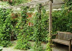 Kauniisti kaartuva, rakenteeltaan sopivan yksinkertainen pergola puutarhaan