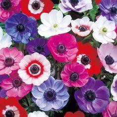 初心者でもできる!基本の土作りから肥料のやり方、花の種まきや球根の植え方、苗作り、栽培管理、病害虫対策など、代表的な花の育て方を図解入りでわかりやすく解説しています。 Anemone Flower, My Flower, Flower Power, Flower Drawing Images, Flower Images, Quilled Paper Art, Rose Icon, Flower Aesthetic, Daffodils
