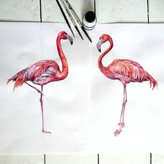 Are they real? ❤ 💫🌸 Amazing flamingos decals by ❤