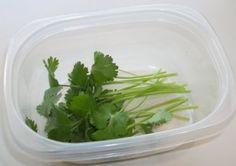 Koe 2 testattu, kuinka kauan korianteri pysyisi tuoreena sijoitettuna ilmatiiviissä astiassa jääkaapissa.