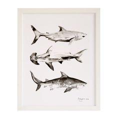 This print by Brittany Zeller-Holland captures the streamlined beauty of three iconic shark species. Shark Pictures, Print Pictures, Shark Drawing, Shark Art, Shark Tattoos, Sea Life Art, Animal Tracks, Shark Week, Cool Artwork