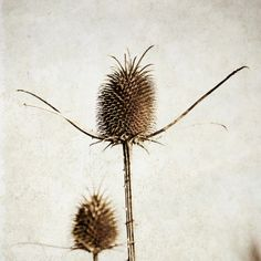 A Divine Seed  Art Minimalist photography  by GrainnePhotography, $10.00