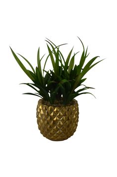 Ceramic+Pineapple+Pot+With+Plant