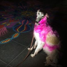 Rhett the dog stopped by, pink for breast cancer awareness    Follow me on Facebook http://www.facebook.com/joe.mangrum.art When sharing please include my links Ⓒ 1994-2014 Joe Mangrum http://www.joemangrum.com #sandart #sandpainting #NYC @joemangrum #colorful #art #streetart #art #streetlife