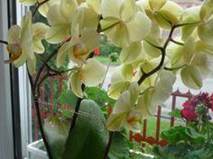 Filléres szuper trükk, hogy szebben virágozzanak a szobanövényeid!