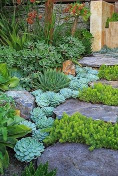 45 Amazing Front Yard Pathway Landscaping Ideas - Page 32 of 46 Low Water Landscaping, Succulent Landscaping, Landscaping With Rocks, Front Yard Landscaping, Succulents Garden, Succulent Plants, Succulent Garden Ideas, Desert Landscaping Backyard, Courtyard Landscaping