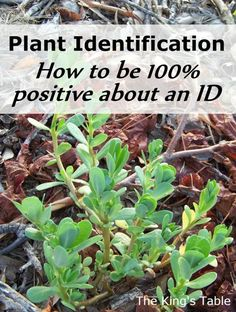 Identification How to be 100 positive about an ID Plant Identification - How to be 100 positive about an ID. Safely forage for wild edibles by identifying the plants with certainty. Healing Herbs, Medicinal Plants, Herb Garden, Garden Plants, Garden Cart, House Plants, Organic Gardening, Gardening Tips, Vegetable Gardening