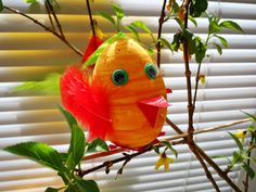 Parrot, Fish, Pets, Animals, Parrot Bird, Animales, Animaux, Pisces, Animal