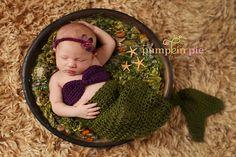 pumpkin pie photography #photogpinspiration