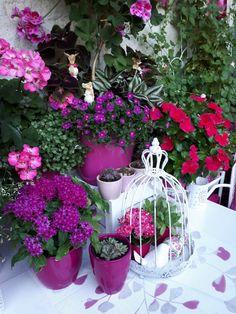 Anfang August 2017 auf meinem Balkon. Es blüht wieder mehr am Esstisch. Beautiful Gardens, Container Gardening, Flower Pots, Plants, Flowers, Dinner Table, Balcony, Deco, Essen