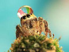 Dewey spider...