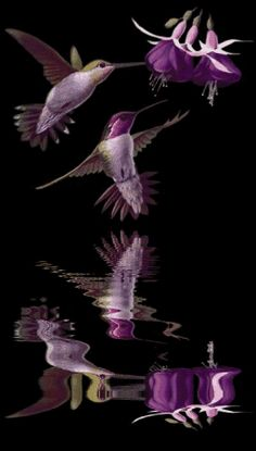 Purple Hummingbirds <3