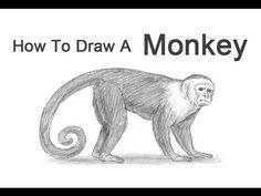 ▶ How to Draw a Monkey (Capuchin) - YouTube