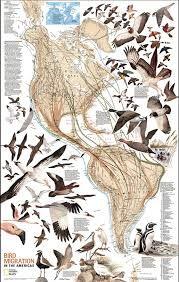 Image result for bird migration patterns