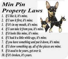 125137538_miniature-pinscher-min-pin-dog-laws-computer-mouse-pad-.jpg (300×260)