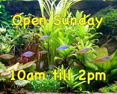 Max Aquarium Happy Easter everyone  🐣 🐟 We are open today 10am till 2pm   Max Aquarium  Local Aquarium Store