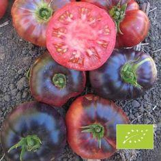 20 graines Gourmet tomate-Black Opal