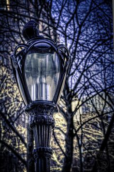 NYC street light and bird-
