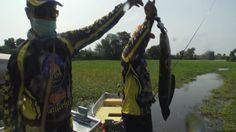 SnakeHead Bite | Hot Shot | Fishing | Thailand   #snake   #snakehead   #fishing   #video   #thailand