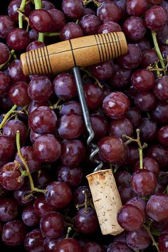 Corkscrew And Wine Cork On Red Grapes | Photo by Garry Gay with Pin-It-Button on #fineartamerica