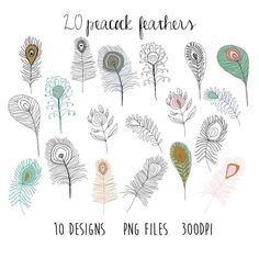 feather clipart  bird clipart / doodle clipart / by papernestco, $2.00