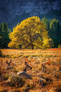 Yosemite Valley, Cook's Meadow