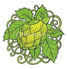 Planta de lúpulo verde — Ilustración de stock #78051232