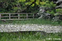 Bosherton Lily Ponds, Stackpole, Pembrokeshire