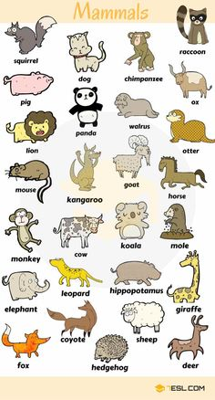 Learn Animals Vocabulary in English - ESL Buzz