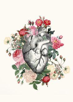 An anatomical heart surrounded by vintage rose illustrations
