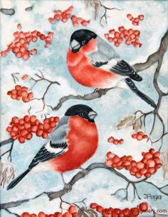 Frosty December Bullfinch Watercolor on canvas