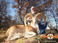 Whitetail Deer Hunting in Texas - Red Stag, Elk and Deer Hunts - Exotic & Whitetail Trophy Hunts - Squaw Mountain Ranch Whitetail Deer Hunting, Fallow Deer, Whitetail Bucks, Texas Hunting, Trophy Hunting, Red Sheep, Hunts, Zoo Animals, Exotic Pets